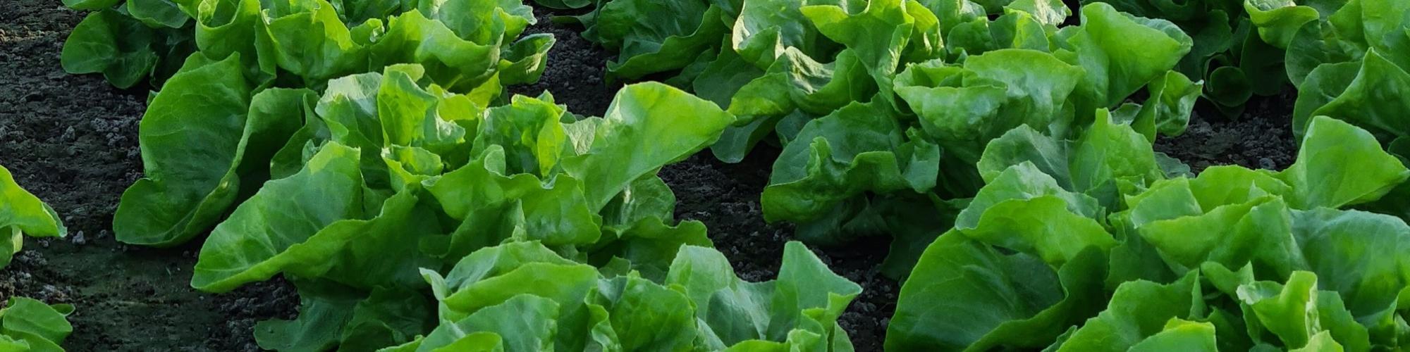 Carsten Kremer Landwirtschaft und Gemüsebau