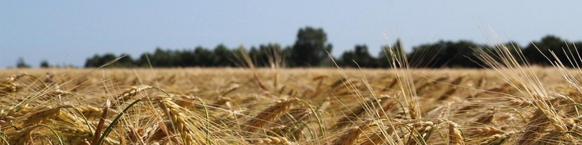 Agrarprodukte Dedelow GmbH