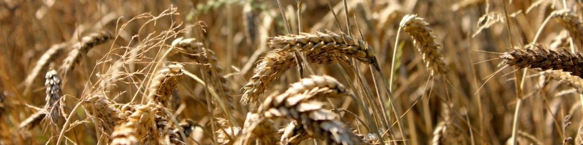 HEINRICH GOES Agrarhandel