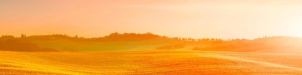 IAK Agrar Consulting GmbH cover