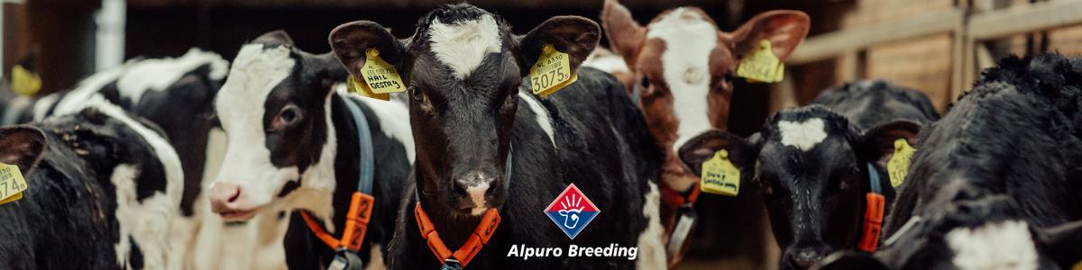 Alpuro Breeding cover